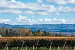Volcano Aconcagua Cordillera und Weinberg in der Argentinien-Provinz von Mendoza lizenzfreies stockfoto
