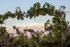 Volcano Aconcagua e vigna, provincia dell'Argentina del Mendoza Immagine Stock