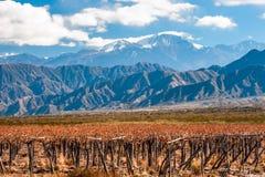 Volcano Aconcagua och vingård, argentinskt landskap av Mendoza Arkivfoto