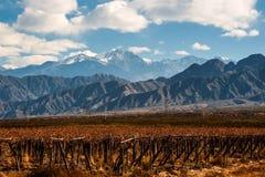 Volcano Aconcagua und Weinberg, Argentinien Stockbilder