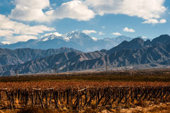 Volcano Aconcagua and Vineyard, Argentine Stock Images