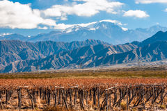 Volcano Aconcagua and Vineyard,  Argentine province of Mendoza. Volcano Aconcagua and Vineyard. Aconcagua is the highest mountain in the Americas at 6,962 m (22 Stock Photo
