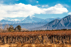 Volcano Aconcagua and Vineyard, Argentine province of Mendoza Stock Photography