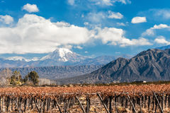 Volcano Aconcagua and Vineyard royalty free stock image