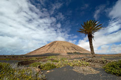 Volcano-agricultural landscape of the Lanzarote Royalty Free Stock Images