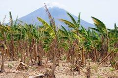 Volcano and bananas Royalty Free Stock Image