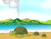 A volcano beach and turtles Stock Image