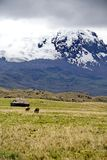 Old house and horses below a glacier capped volcano in the Antisana Ecological Reserve, Ecaudor Royalty Free Stock Photography