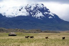 Old house and horses below a glacier capped volcano in the Antisana Ecological Reserve, Ecaudor Royalty Free Stock Photos