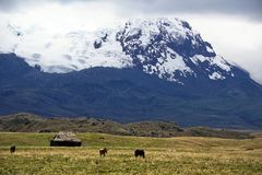 Old house and horses below a glacier capped volcano in the Antisana Ecological Reserve, Ecaudor Royalty Free Stock Photo