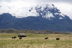Old house and horses below a glacier capped volcano in the Antisana Ecological Reserve, Ecaudor Stock Photos