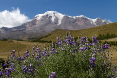 Volcano Chimborazo Royalty Free Stock Photography