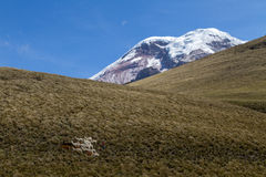 Volcano Chimborazo Royalty Free Stock Photo