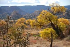 Volcano Cones Cactus Yellow Tree-Bergen Stock Afbeelding