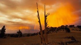 Volcano Desert et arbres image libre de droits