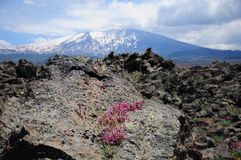 Volcano Etna. Stock Photography