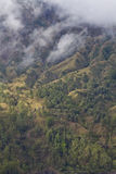 Volcano forest. Shot from the north of mount Batur, Bali, Indonesia Royalty Free Stock Images