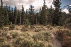 Volcano Hiking Trail Fotografering för Bildbyråer