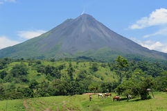 Volcano. Horses living at the foot of volcano in Costa Rica Royalty Free Stock Image