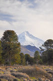 Volcano Lanin, Patagonia, Neuquen Stock Photography
