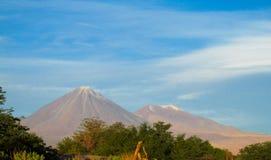 Volcano Licancabur Arkivfoton