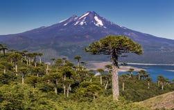 Volcano Llaima - o Chile Fotografia de Stock