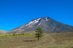 Volcano Lonquimay in Chile stock photography