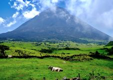 Volcano looming over the landscape. Mount Pico on Pico island is a dormant volcano, but the volcanic soil makes the lower areas  lush and verdant Stock Images