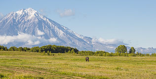 Volcano and meadow with a horse Royalty Free Stock Photography