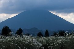 Volcano Mt Karisimbi in Volcanoes National Park Rwanda stock image
