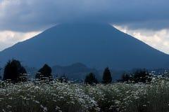 Volcano Mt Karisimbi in Vulkanen Nationaal Park Rwanda stock afbeelding