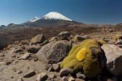 Volcano Parinacota. Snowcap Volcano at Chile- Bolivian border Stock Images