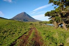 Volcano Pico Azores härligt landskap arkivfoton