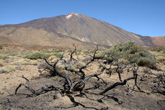 Volcano Pico de Teide, Tenerife Spain Stock Images