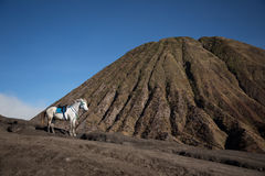 Volcano top and standing horse alone Royalty Free Stock Photo