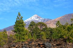 Volcano view through trees Royalty Free Stock Image