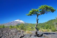 Volcano Villarrica Royalty Free Stock Image