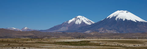 Volcanoes on the Altiplano Stock Photography