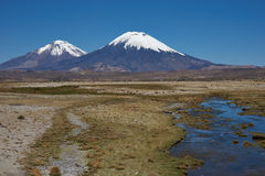 Volcanoes on the Altiplano. Snow and ice covered peaks of the volcanoes Parinacota (6342m) and Pomerape (6240m), tower above the altiplano in Lauca National Park Royalty Free Stock Photo