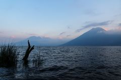 Volcanoes i drzewo z ptakiem podczas zmierzchu przy Jeziornym Atitlan przy brzeg San Marcos, Gwatemala Zdjęcia Stock