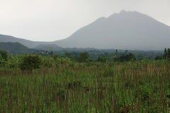 Volcanoes in Kisoro, Uganda Stock Image