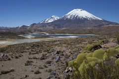 Volcanoes in Lauca National Park. Volcanoes Parinacota and Pomerape in Lauca National Park high on the Altiplano of northern Chile. In the foreground lakes known Stock Photography