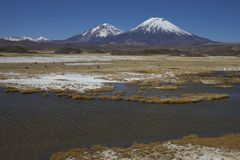 Volcanoes in Lauca National Park. Volcanoes Parinacota and Pomerape in Lauca National Park high on the Altiplano of northern Chile Stock Images