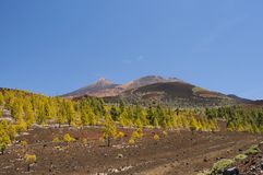 Volcanoes in Tenerife. Teide and Pico Viejo Royalty Free Stock Photography
