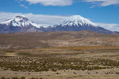 Volcanos on the Altiplano. Snow and ice covered peaks of the volcanoes Parinacota (6342m) and Pomerape (6240m) rising above the Altiplano of Northern Chile in Royalty Free Stock Images