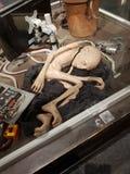 Voldemort image libre de droits