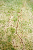 Vole damage. Image of tracks in the lawn left by voles or moles royalty free stock images
