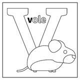 Vole, letter V coloring page Stock Photos