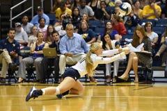 2015 voleibol del NCAA - Tejas @ Virginia Occidental Foto de archivo libre de regalías