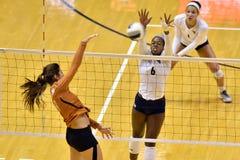 2015 voleibol del NCAA - Tejas @ WVU Fotos de archivo libres de regalías